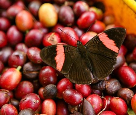Biodiversidad y sostenimientolow
